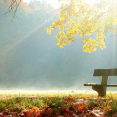 ALP- Alpenpark - Goldener Herbst (1)