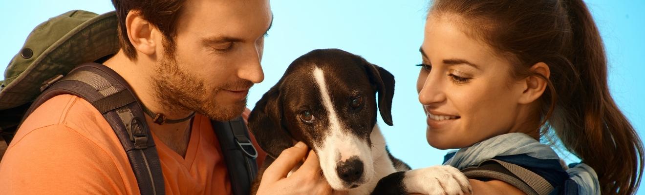 KAL-Seefeld - Urlaub mit Hund-slider